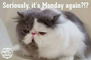Like Seriously????MONDAY AGAIN!